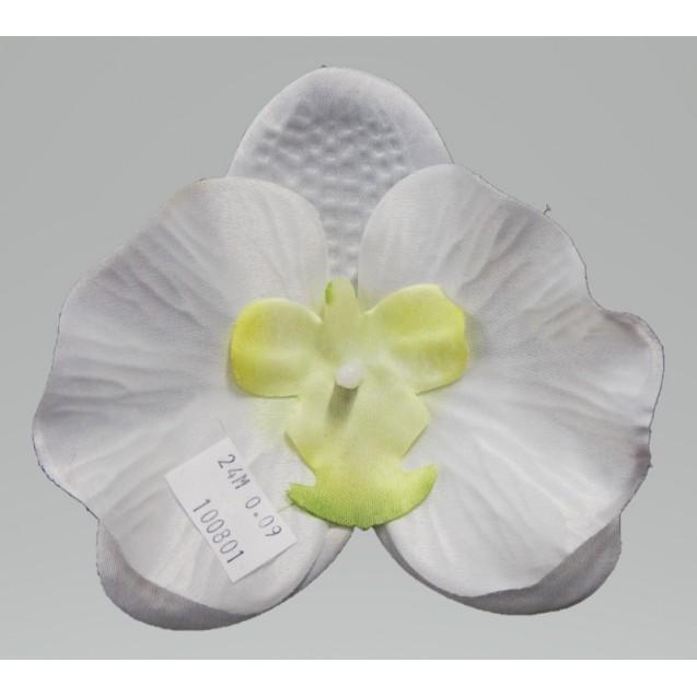 Orchidea hlava / 1008