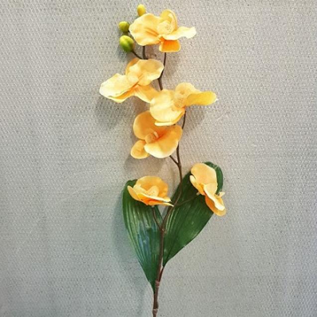 107809  Orchidea stonková peach/ J078