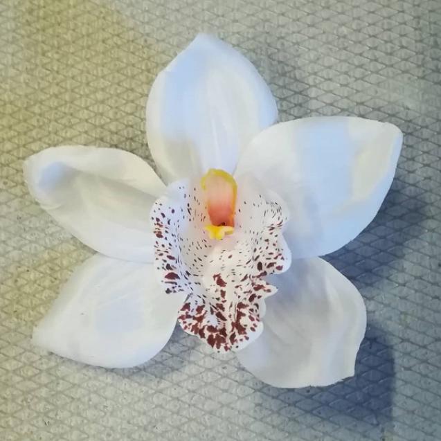 Orchidea hlava / 2017