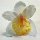 Orchidea hlava /1012