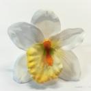 Orchidea hlava / 1015