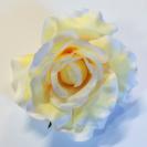 Ruža rozvinutá / 1066
