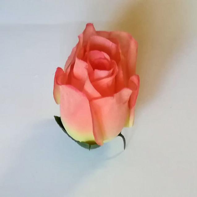 Ruža puk / 1826