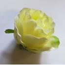 Ruža puk / W146
