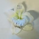 Orchidea hl.13cm / 416