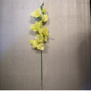 Gladiola ks / 1004