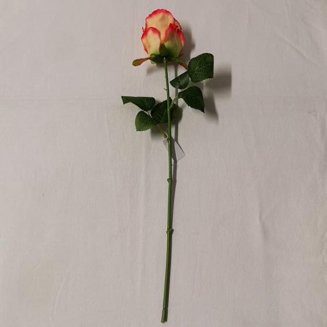 Ruža stonková / 108204