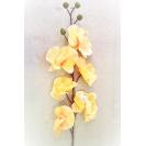 190603 Orchidea stonková  LT.Yellow 80cm