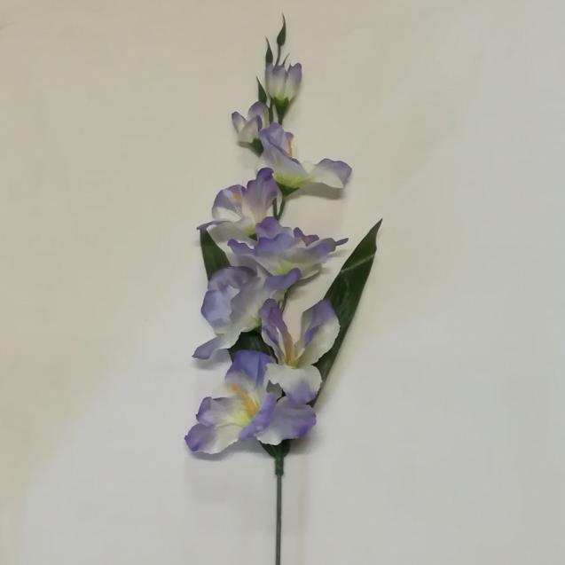 Gladiola / 303524
