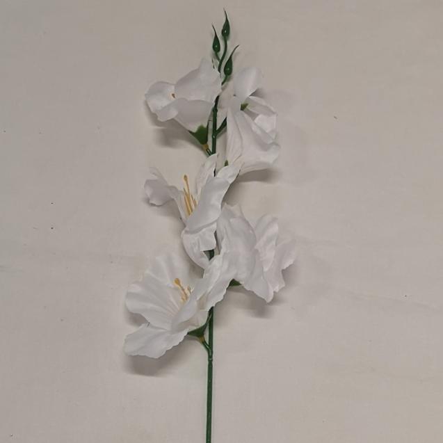 Gladiola ks White / 400474