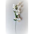 128500 Gypsomila White