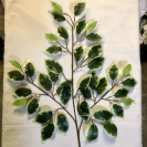 Ficus Trojkonár/111100
